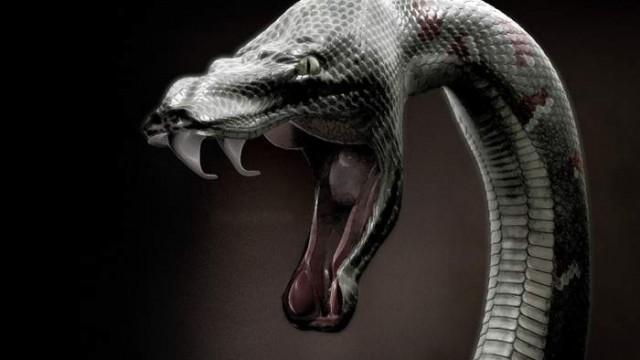 Ведические знаки и символ Змеи